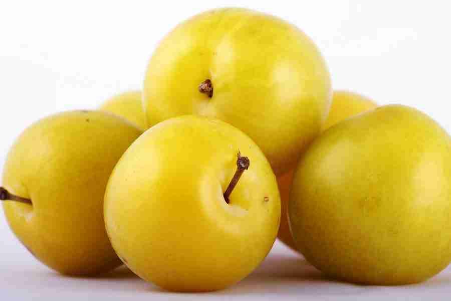 Dwarf Coes Golden Drop Plum fruit tree- buy online